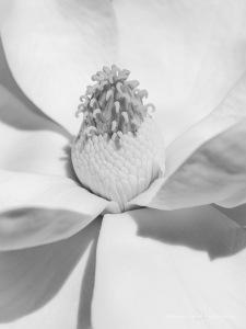 2019 02 09 Flowers 1609