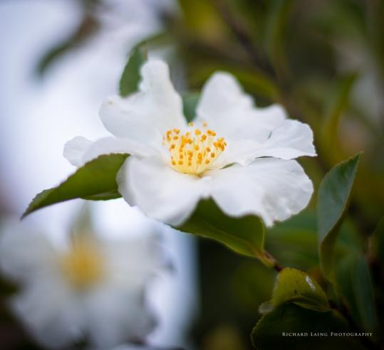 2019 06 12 Flowers 1613